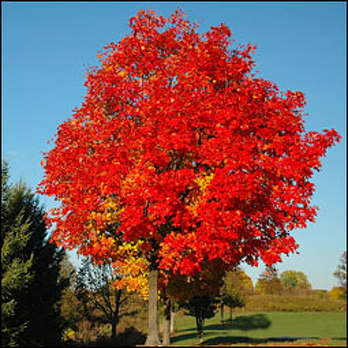 Newsroom : Ontario Tree Atlas Leaves Out Fall Planting Guesswork