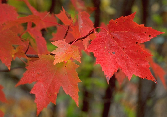Red, orange and yellow abound in Ontario's provincial parks this time of year.