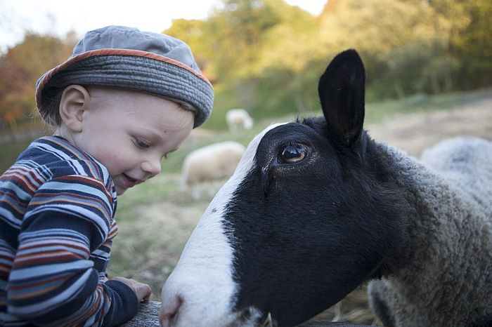 Visit a farm to make new friends. Credit: Ontario Tourism Marketing Partnership Corporation