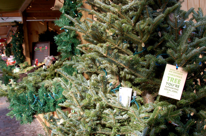Find the perfect Christmas tree. Look for the Ontario Wood tag.