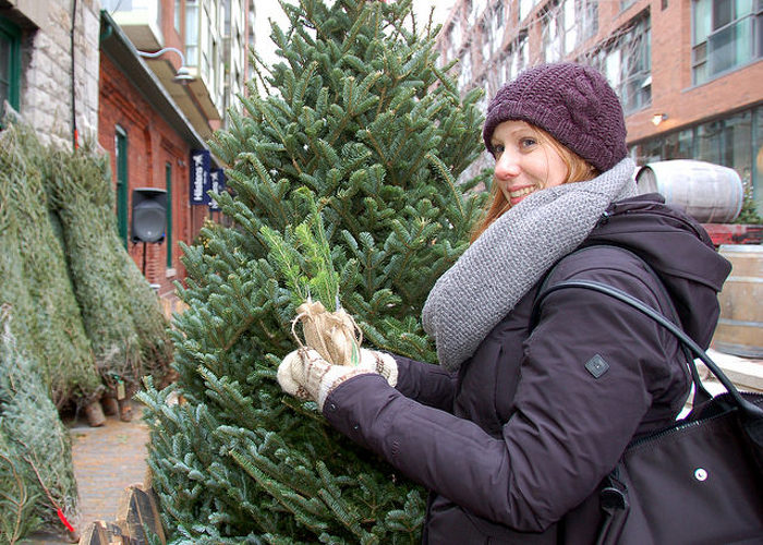 More than one million Christmas trees are harvested annually in Ontario for the holidays. The odds of finding a perfect one are pretty good.