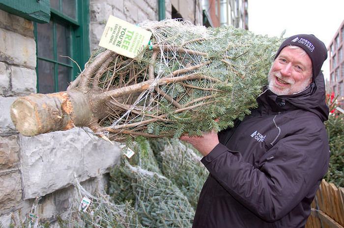 Choosing an Ontario grown Christmas tree and greenery from a tree farm or retail vendor helps support local businesses and build the province's economy.