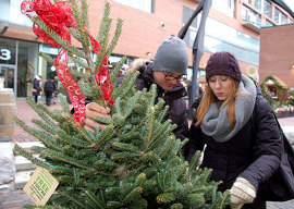 Locally grown, environmentally friendly Christmas trees create cherished memories that will last a life-time.