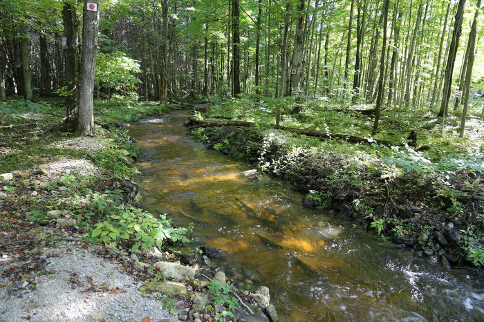 A successful stream restoration project on the Sydenham River near Owen Sound