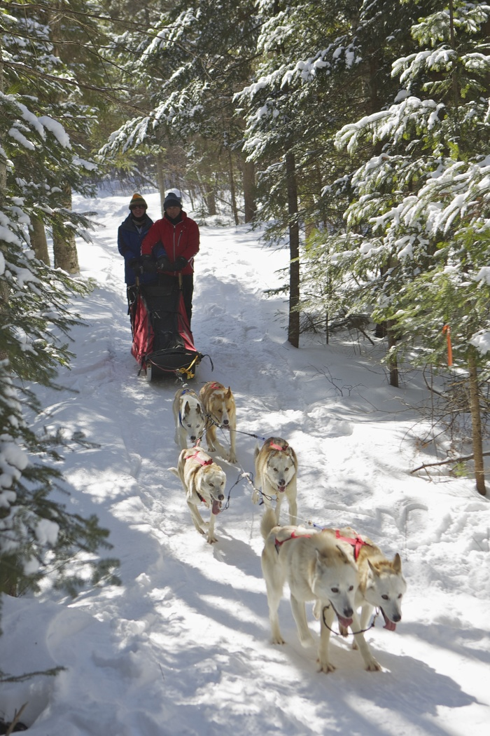Dog sledding at Algonquin