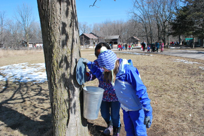 Learning about maple syrup at Bronte Creek Provincial Park