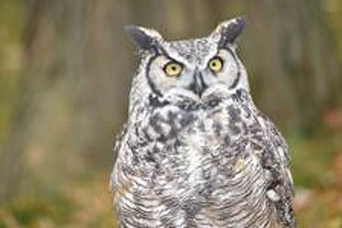 Learn all about owls at the Niagara Parks Butterfly Conservatory