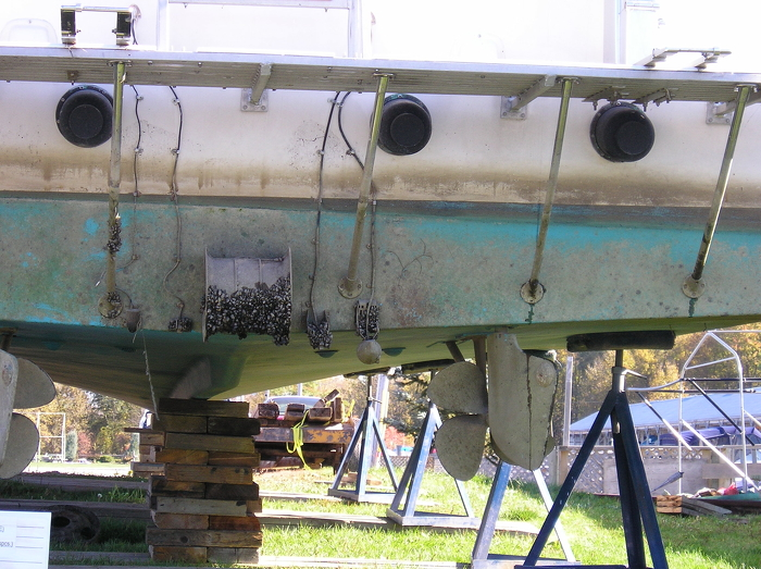 "Zebra mussels are clever hitchhikers, as seen here on the underside of a boat, which Ontario and its partners have been trying to battle through the Zebra Busters program, started in the early nineties, and today's ""clean, drain and dry"" public awareness campaign. Credit: Ontario Federation of Anglers and Hunters"