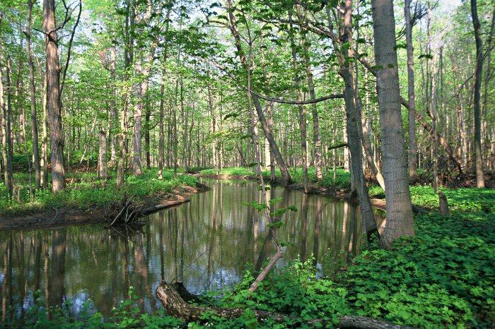 Parc provincial Clear Creek Forest