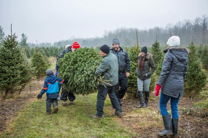 Les arbres de Noël écologiques cultivés localement créent de précieux souvenirs qui resteront gravés dans la mémoire.