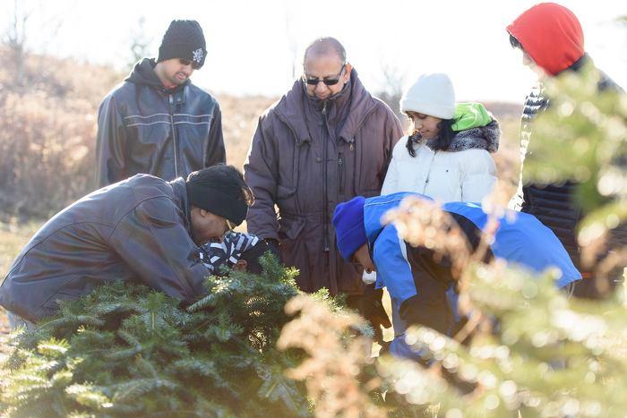 Choisir un arbre de Noël et la verdure associée cultivés en Ontario du producteur ou d'un détaillant contribue à soutenir les entreprises locales et à stimuler l'économie de la province.