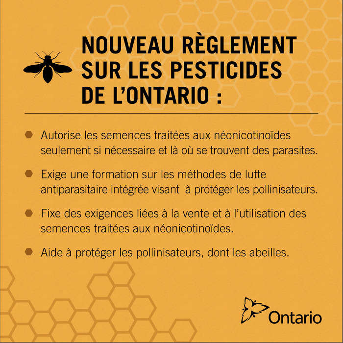 L'Ontario adopte de nouvelles règles afin de protéger les pollinisateurs
